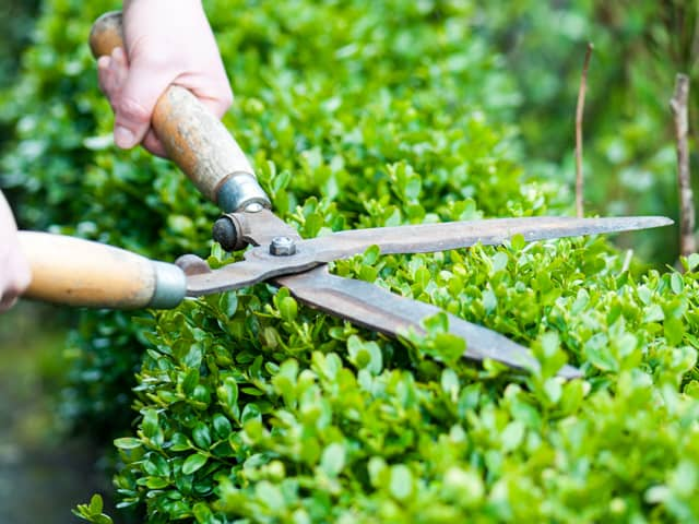 How Much Does Garden Maintenance Cost?